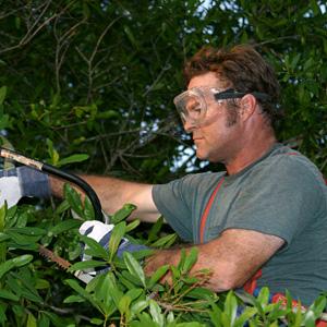 Arborist trimming a tree