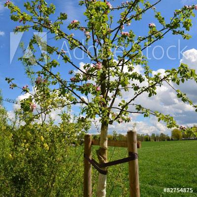 Tree Straightening
