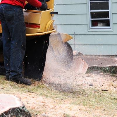 Grinding Tree Stump