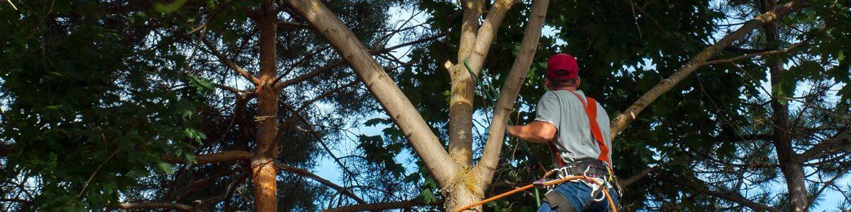 Laborer in Tree