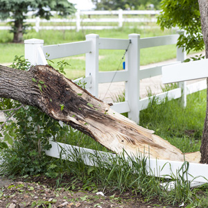 Fallen tree causing property damage